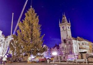 Do Prahy přivezli vánoční strom z České Lípy.