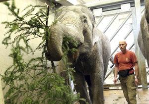 Sloni si netradiční krmení také užili.