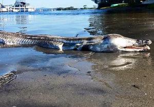 Záhadné monstrum vyplavilo moře v Austrálii.