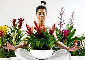 Víte, co potřebují pokojové květiny před odjezdem na dovolenou, aby vám dělaly radost i po návratu z ní? Poradíme vám!