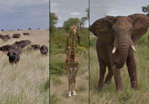 Africké safari si díky Google Street View může prohlédnout z pohodlí domova.