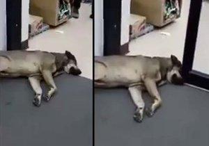S nejlínějším psem světa nic nehne.