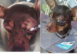Filuta má velké bolesti: Děti polily psíka savem a zbily ho klackem.