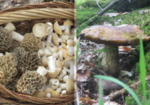 I přes chladné počasí už houby rostou.