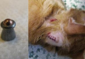 Kočky střílí speciálně upraveným střelivem vcentru Hodonína neznámý lump. Jednu vsobotu zabil, dvě další pár dní předtím zmrzačil.