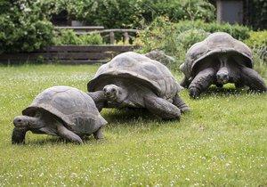 Milovníci želv si o tomto víkendu přijdou v Zoo Praha na své.