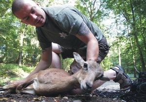Pracovník zvířecí záchranky pomáhá mláděti muflona v areálu Thomayerovy nemocnice.