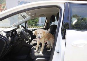 Cestování v autě se psem má svá zákonná pravidla (ilustrační foto)