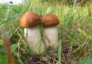 O víkendu bude zataženo, místy déšť. Porostou houby.