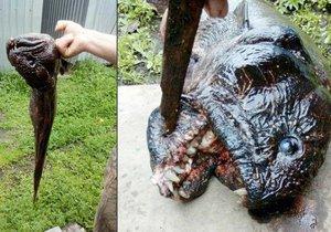 Rybáři v Rusku z vody vytáhli bizarního rybího mutanta.