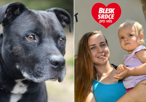 Michaela Zemánková (28) z útulku Dogpoint: Každý pes může najít domov
