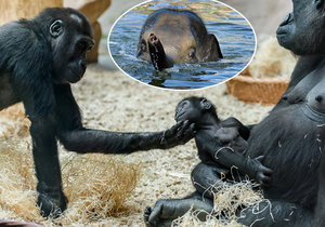 Zvířata v pražské zoo se rozhodně nenudí!