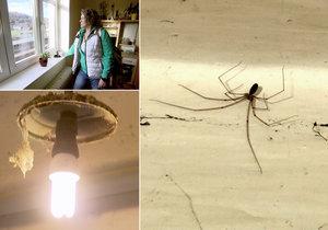 Výměnu manželek poněkud naruší pavouci. Každý zkrátka tyhle potvůrky nemusí.