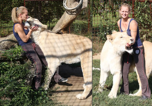 Netradiční mazlíček: Má dva metry a váží 230 kilo. Angie po zahradě běhá lev