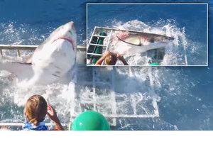 Žralok lítě zaútočil na potápěče.