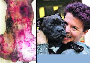 Obyvatelé Černého Mostu mají strach. Po okolí se potuluje divočák, který v sobotu 8. října potrhal a vykastroval psa.