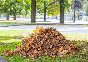 Zapomeňte na hrábě! Na to, abyste rychle zbavili svůj trávník všeho spadaného listí, vám stačí jen kus papírové krabice.