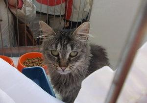 V Praze proběhne adventní umisťovací výstava koček.