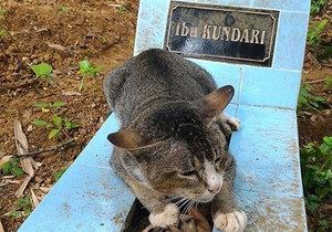 Kočka stále hlídá svoji paničku.