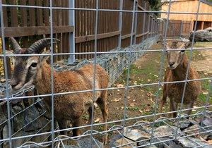 Přijďte o třetí adventní neděli udělat radost zvířatům zookoutku v Malé Chuchli.