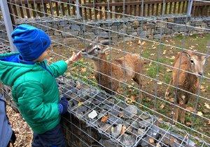 Hostivařský lesopark má novou Divokou zahradu: Obývají ji handicapovaná zvířata