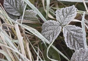 Mráz v Česku bude zřejmě bez sněhu.