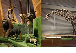Jedinečná výstava Archa Noemova v Národním muzeu. Exempláře ze všech koutů světa a dokonce i dinosaurus.