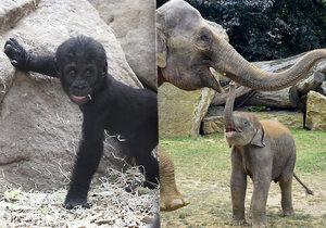 Zoo Praha zažila plodný rok, narodilo se tu 1191 mláďat.