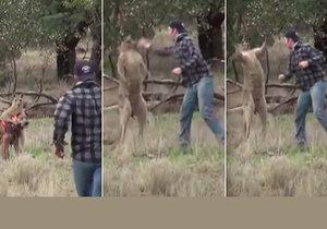Boxerský zápas naštvaného páníčka s klokanem, který mu napadl psa