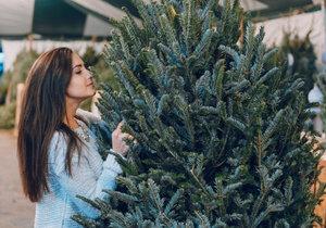 Jak vybrat vánoční stromek: Je lepší jedle, nebo smrk?