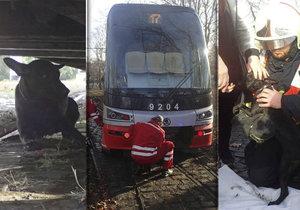 Štěně ve Stromovce vběhlo pod jedoucí tramvaj. Málem ho rozdrtila.