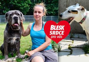 Ralfík i Brit našli díky Blesku nový domov: Tohle jsme nečekali, říká ředitelka