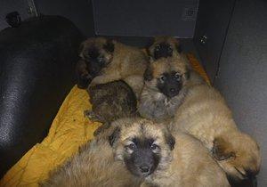 Osm roztomilých štěňat někdo odložil. Teď hledají nový domov.