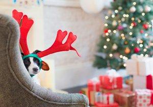 Najdou něco pod stromečkem i vaši mazlíčci.