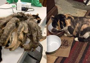 Z dredatého monstra udělali milovníci zvířat opět krásného domácího mazlíčka.