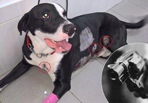Strážník při kontrole squatu v Košířích postřelil psa.