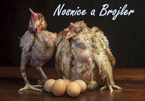 I takhle vypadají slepice, jejichž vejce jíme