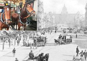 Koňská dráha na Václavském náměstí roku 1895 a zachovalý vůz koněspřežné tramvaje, který můžete vidět v Muzeu MHD ve Střešovicích.