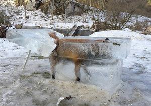 Nebohá liška zamrzla v Dunaji, ale lidem na internetu je k smíchu.
