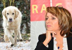 Volně pobíhající pes a pražská primátorka Adriana Krnáčová (ANO)