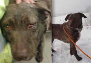 Týraný pes dostal příznačné jméno – Bojar.