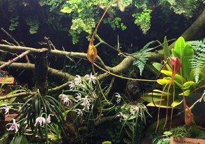 Výstava orchidejí, 2017