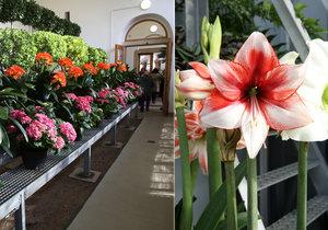 Výstava Předjaří na Pražském hradě potrvá pouze 10 dnů. Vidět na ní můžete jak květiny, tak sochy či nábytek.