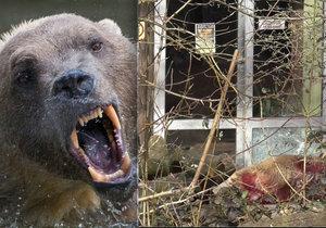 V německé zoo utekl vzácný medvěd: Oblíbeného Tapse museli zastřelit.