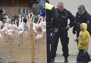 Případ ubitého plameňáka v jihlavské zoo: Rodiče dětí začnou splácet příští měsíc