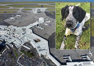 Policejní pes Grizz byl zastřelen na letišti v Aucklandu.