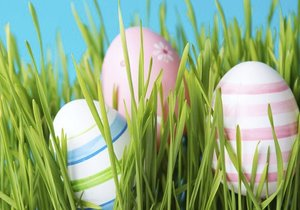 Velikonoční osení: Kdy je ten pravý čas ho zasadit?