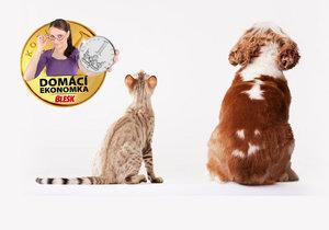 Kočku nebo psa si můžete pojistit. Na kolik vás to vyjde?