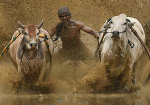 Indonéské závody Pacu Jawi