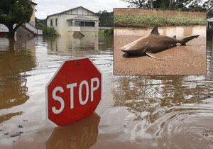 Povodně v Austrálii vyplavily i místní predátory.